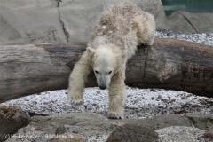 Zoo_am_Meer_Bremerhaven_190514_IMG_8508