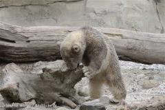 Zoo_am_Meer_Bremerhaven_190514_IMG_8557