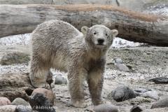 Zoo_am_Meer_Bremerhaven_190514_IMG_8574