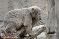 Zoo_am_Meer_Bremerhaven_190514_IMG_8586