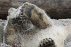 Zoo_am_Meer_Bremerhaven_190514_IMG_8621
