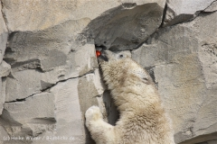 Zoo_am_Meer_Bremerhaven_210714_copy_Heike_Weiler_IMG_2906