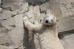 Zoo_am_Meer_Bremerhaven_210714_copy_Heike_Weiler_IMG_2911