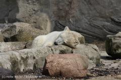 Zoo_am_Meer_Bremerhaven_210714_copy_Heike_Weiler_IMG_2934