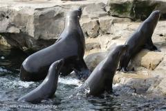 Zoo_am_Meer_Bremerhaven_210714_copy_Heike_Weiler_IMG_2962