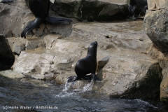 Zoo_am_Meer_Bremerhaven_210714_copy_Heike_Weiler_IMG_2967