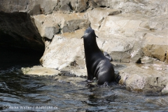 Zoo_am_Meer_Bremerhaven_210714_copy_Heike_Weiler_IMG_2969