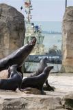 Zoo_am_Meer_Bremerhaven_210714_copy_Heike_Weiler_IMG_2989