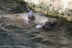 Zoo_am_Meer_Bremerhaven_210714_copy_Heike_Weiler_IMG_3039