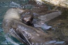 Zoo_am_Meer_Bremerhaven_210714_copy_Heike_Weiler_IMG_3062
