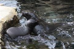 Zoo_am_Meer_Bremerhaven_210714_copy_Heike_Weiler_IMG_3136
