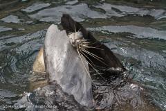 Zoo_am_Meer_Bremerhaven_210714_copy_Heike_Weiler_IMG_3144