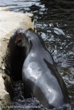 Zoo_am_Meer_Bremerhaven_210714_copy_Heike_Weiler_IMG_3188