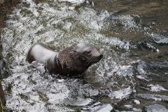 Zoo_am_Meer_Bremerhaven_210714_copy_Heike_Weiler_IMG_3197