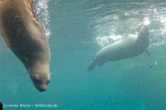 Zoo_am_Meer_Bremerhaven_210714_copy_Heike_Weiler_IMG_3209_5334