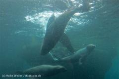 Zoo_am_Meer_Bremerhaven_210714_copy_Heike_Weiler_IMG_3209_5347