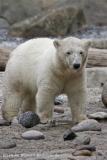 Zoo_am_Meer_Bremerhaven_210714_copy_Heike_Weiler_IMG_3235