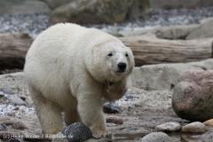 Zoo_am_Meer_Bremerhaven_210714_copy_Heike_Weiler_IMG_3237