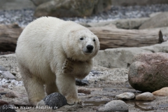 Zoo_am_Meer_Bremerhaven_210714_copy_Heike_Weiler_IMG_3238
