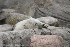 Zoo_am_Meer_Bremerhaven_210714_copy_Heike_Weiler_IMG_3249