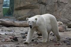 Zoo_am_Meer_Bremerhaven_210714_copy_Heike_Weiler_IMG_3253