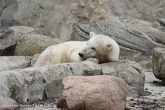 Zoo_am_Meer_Bremerhaven_210714_copy_Heike_Weiler_IMG_3258