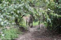 Zoo_am_Meer_Bremerhaven_210714_copy_Heike_Weiler_IMG_3265