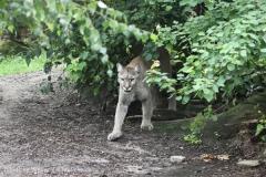 Zoo_am_Meer_Bremerhaven_210714_copy_Heike_Weiler_IMG_3273