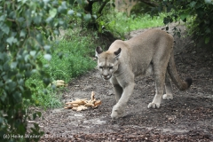 Zoo_am_Meer_Bremerhaven_210714_copy_Heike_Weiler_IMG_3282