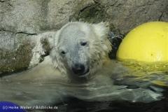 Zoo_am_Meer_Bremerhaven_210714_copy_Heike_Weiler_IMG_3995