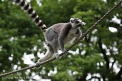 Zoo_Duisburg_280614_IMG_0370