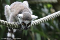Zoo_Duisburg_280614_IMG_0382