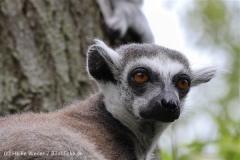Zoo_Duisburg_280614_IMG_0393