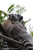 Zoo_Duisburg_280614_IMG_0433