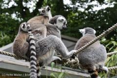 Zoo_Duisburg_280614_IMG_0446
