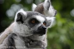 Zoo_Duisburg_280614_IMG_0468
