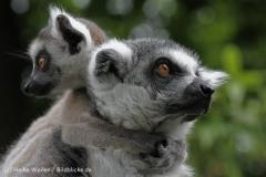 Zoo_Duisburg_280614_IMG_0473