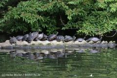 Zoo_Duisburg_280614_IMG_0494