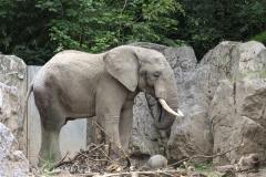Zoo_Duisburg_280614_IMG_0505