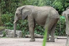 Zoo_Duisburg_280614_IMG_0509