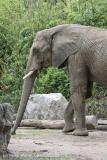 Zoo_Duisburg_280614_IMG_0515