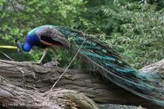 Zoo_Duisburg_280614_IMG_0524