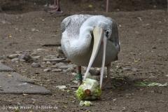Zoo_Duisburg_280614_IMG_0531