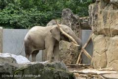 Zoo_Duisburg_280614_IMG_0531_5026