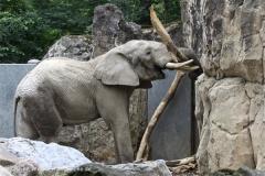 Zoo_Duisburg_280614_IMG_0539