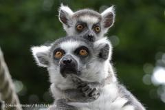 Zoo_Duisburg_280614_IMG_0478