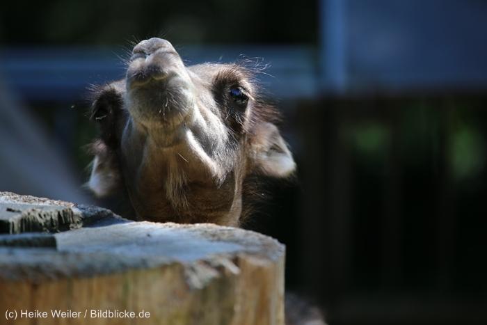 Zoo_Dortmund_100715_IMG_6647