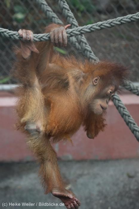 Zoo_Dortmund_100715_IMG_6671