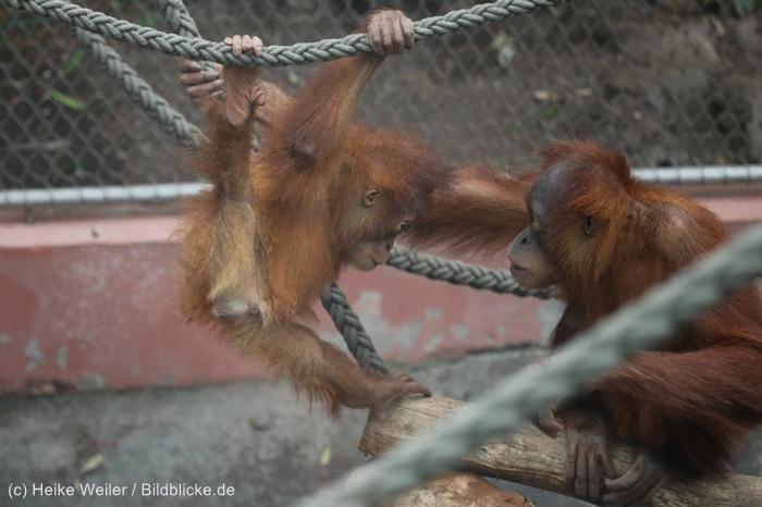Zoo_Dortmund_100715_IMG_6673