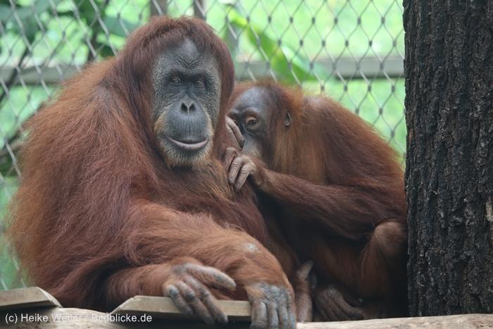 Zoo_Dortmund_100715_IMG_6689